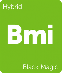 Bmi Black Magic Leafly cannabis strain tile