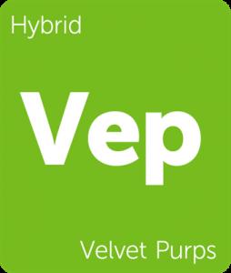 Vep Velvet Purps Leafly cannabis strain tile