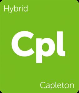 Capleton Leafly cannabis strain tile
