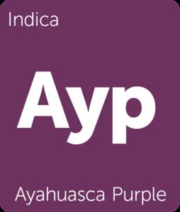 Ayahuasca Purple Leafly cannabis strain tile
