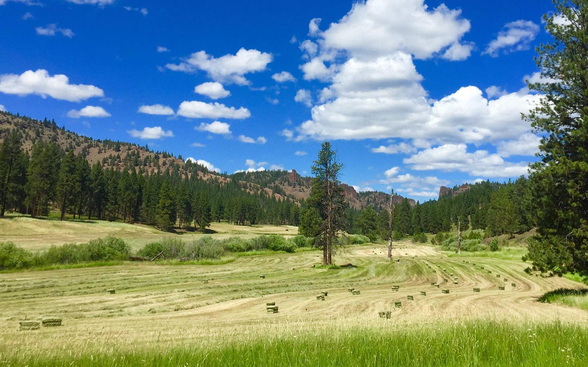 The Ultimate Marijuana Summer Road Trip Through Oregon | Leafly