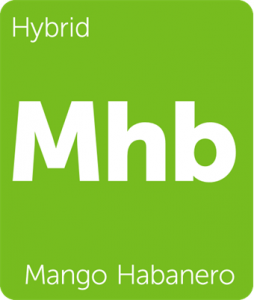Mango Habanero Leafly cannabis strain tile