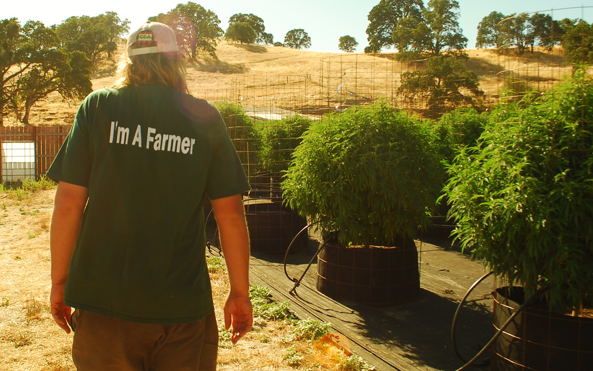 How a Cannabis Ban Turned One California County Into \'Ground Zero ...