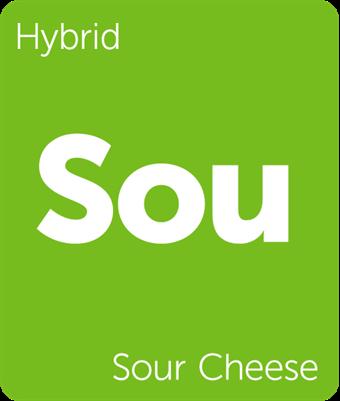Leafly Sour Cheese cannabis strain