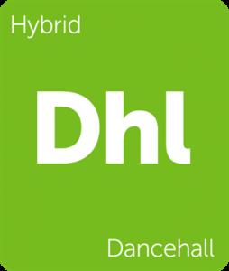 Leafly Dancehall hybrid cannabis strain