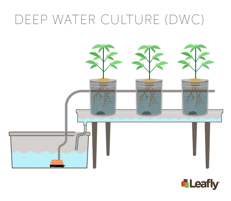 Hydroponic Growing Systems: Deep Water Culture (DWC)