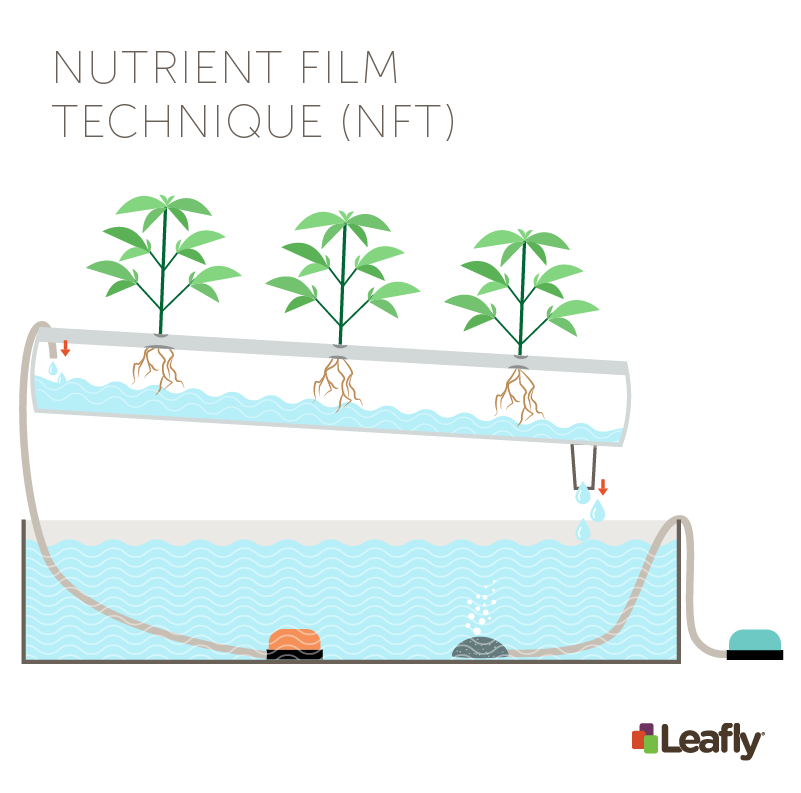 Hydroponic Growing Systems: Nutrient Film Technique (NFT)