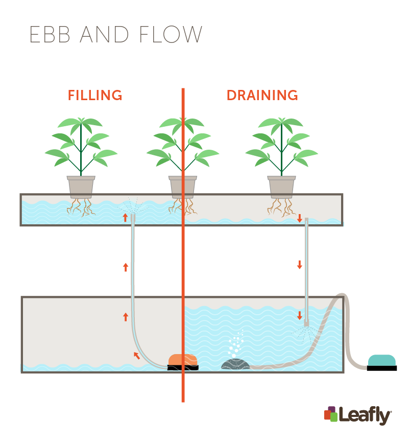 Hydroponic Growing Systems: Ebb and Flow