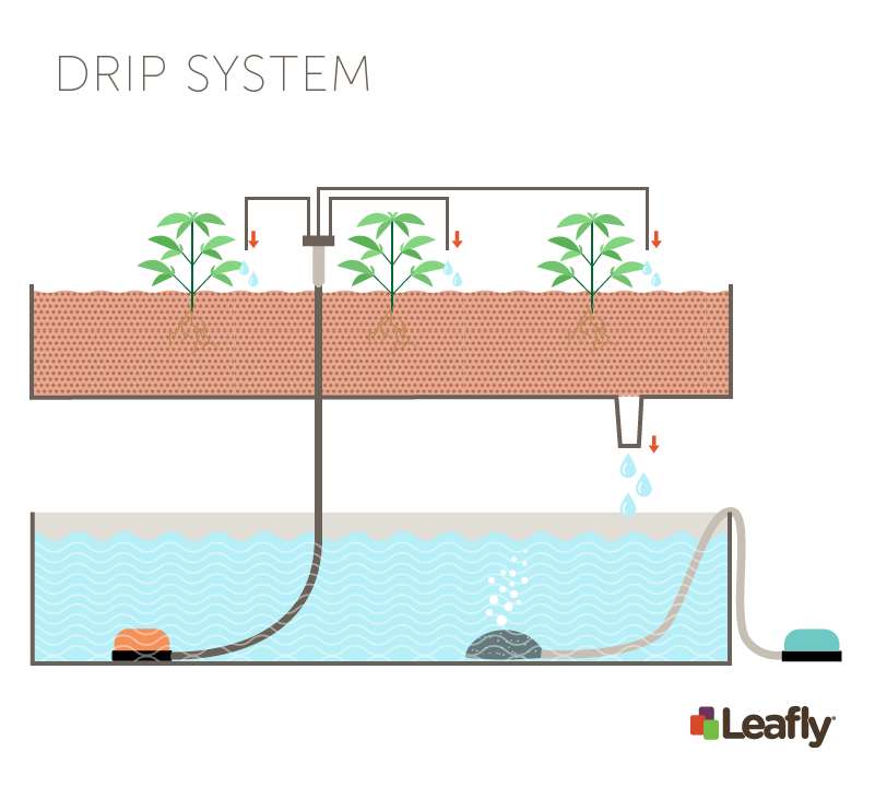 Hydroponic Growing Systems: Drip System