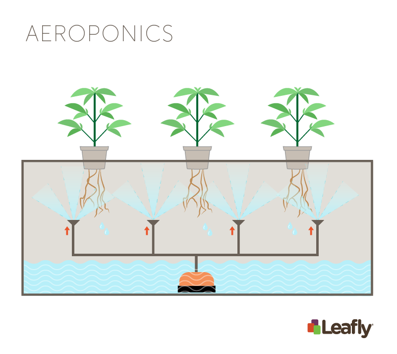 Hydroponic Growing Systems: Aeroponics