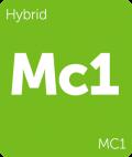 Leafly MC1 hybrid cannabis strain