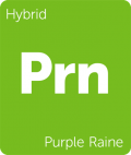 Leafly Purple Raine hybrid cannabis strain