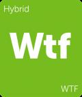 Leafly WTF hybrid cannabis strain