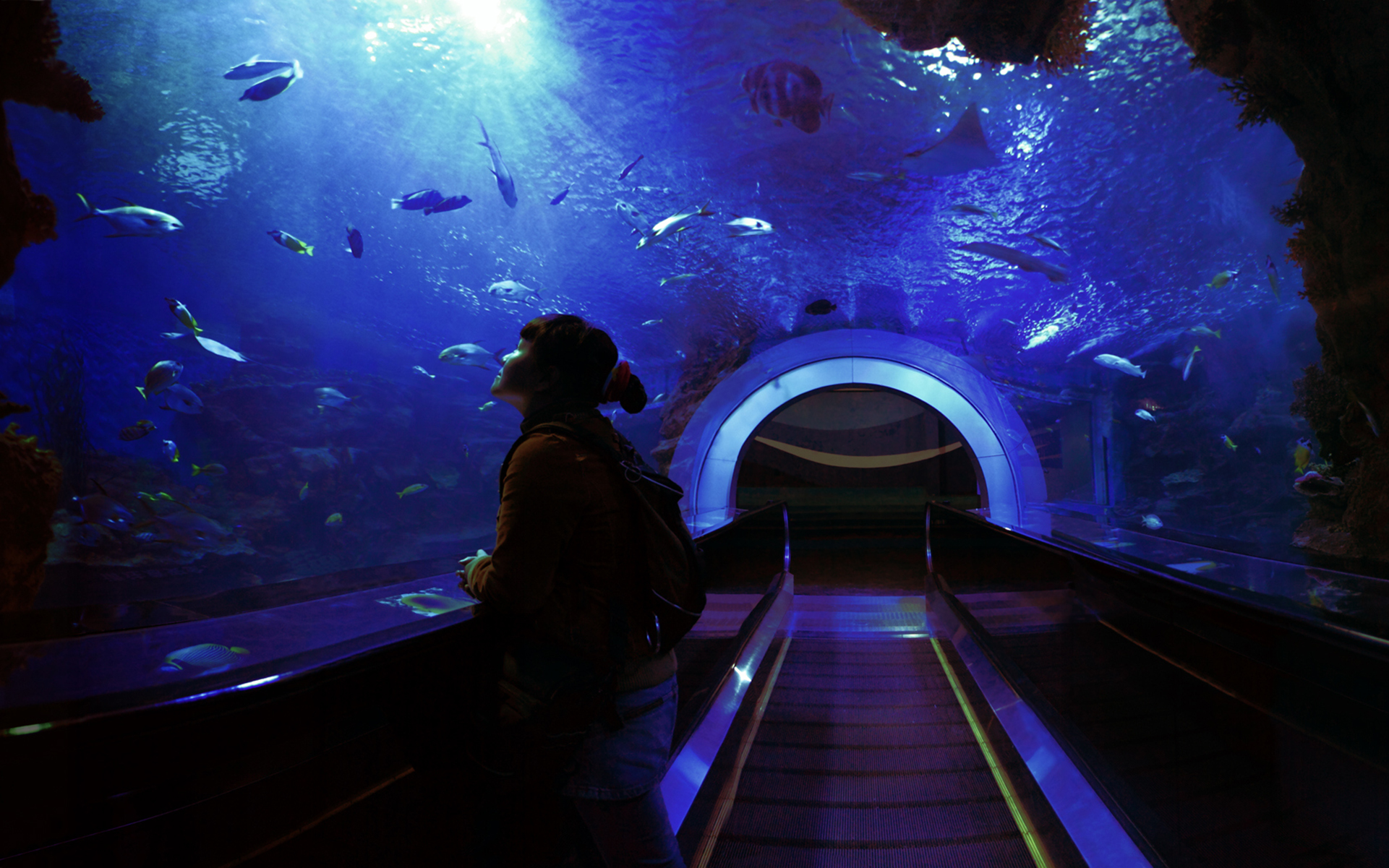 The Aquarium: Is It Worth the High?