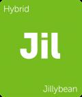 Jillybean Leafly cannabis strain tile