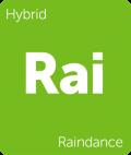 Raindance Leafly cannabis strain tile