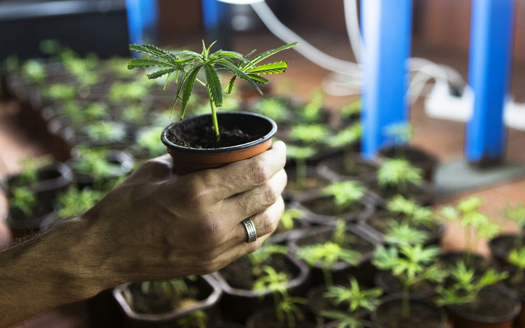 Lab Test Finds 77% of California Clones Contaminated With