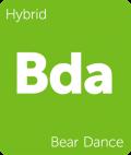 Bear Dance Leafly cannabis strain tile
