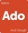 Acid Dough Leafly cannabis strain tile