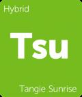 Leafly Tangie Sunrise hybrid cannabis strain