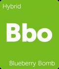 Leafly Blueberry Bomb hybrid cannabis strain