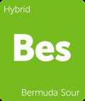 Bermuda Sour Leafly cannabis strain tile