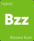 Blizzard Bush Leafly cannabis strain tile