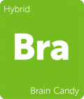 Brain Candy Leafly cannabis strain tile