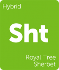 Royal Tree Sherbet Leafly cannabis strain tile