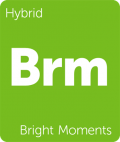 Bright Moments Leafly cannabis strain tile