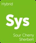 Sour Cherry Sherbert Leafly cannabis strain tile