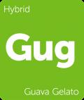 Guava Gelato Leafly cannabis strain tile