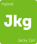 Jacky Girl Leafly cannabis strain tile