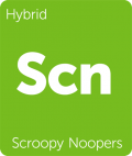 Leafly Scroopy Noopers hybrid cannabis strain