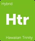 Leafly Hawaiian Trinity hybrid cannabis strain