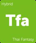 Thai Fantasy Leafly cannabis strain tile