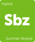 Summer Breeze Leafly cannabis strain tile