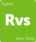 River Song Leafly cannabis strain tile