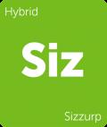 Sizzurp Leafly cannabis strain tile