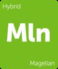 Magellan Leafly cannabis strain tile