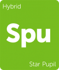 Star Pupil Leafly cannabis strain tile