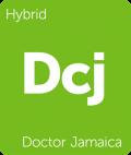 Doctor Jamaica cannabis strain tile