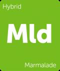 Marmalade cannabis strain tile