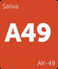 AK-49 cannabis strain tile