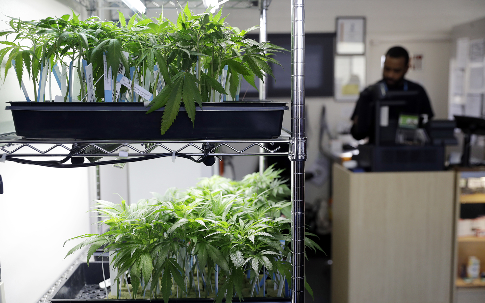California City Cuts Cannabis Taxes, Others Expected to Follow