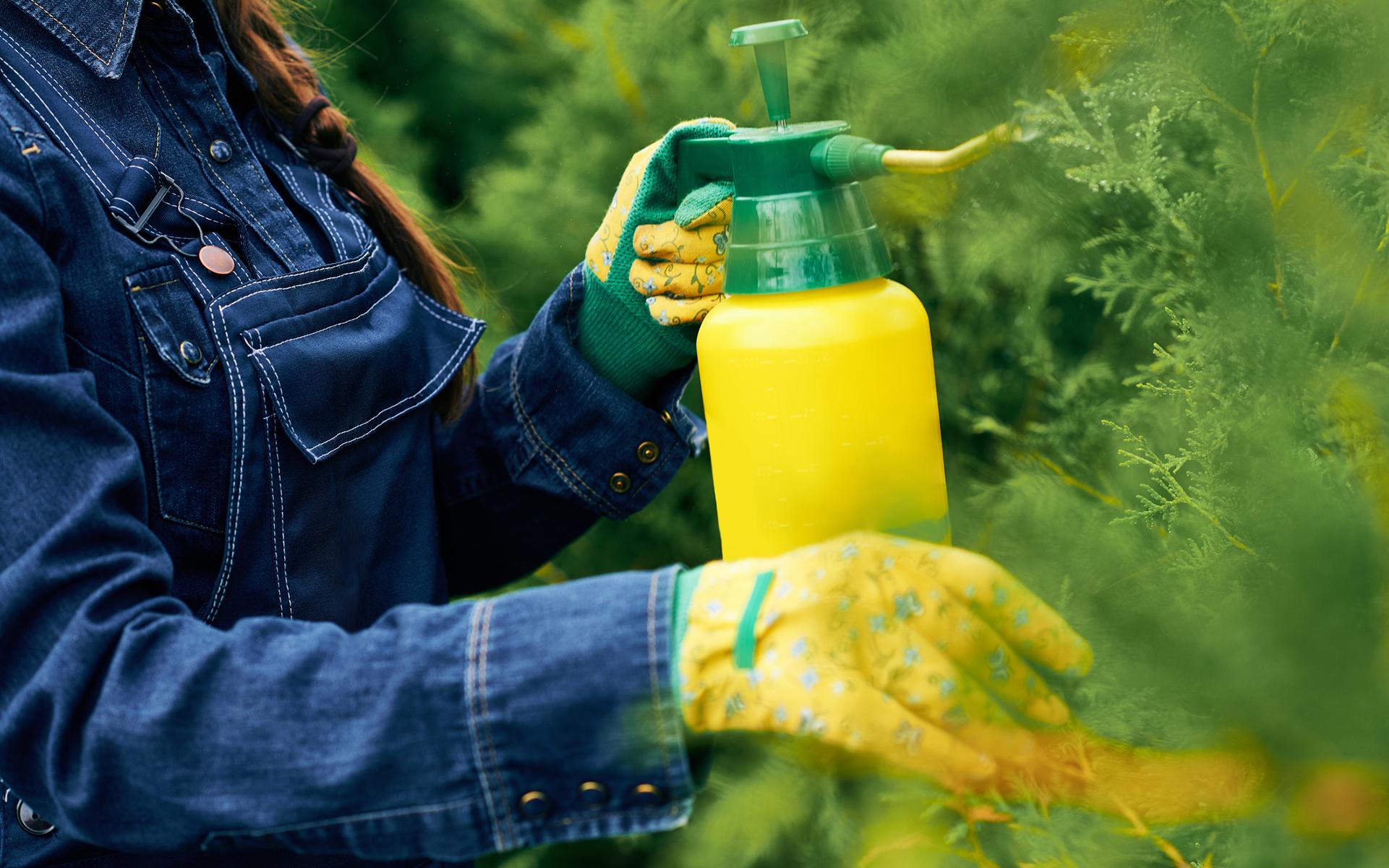 Introduction to Foliar Feeding Cannabis Plants | Leafly