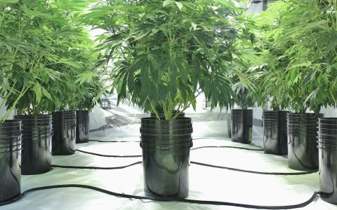 choosing the right container for cannabis 480x300 - How to Grow Marijuana Outdoors: Your Regional Guide to Growing Healthy Cannabis Plants Outdoors