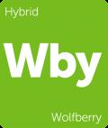 Wolfberry marijuana strain tile