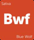 Blue Wolf marijuana strain tile