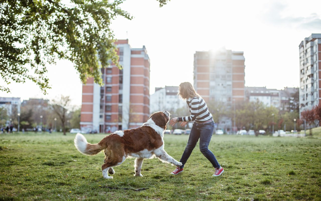 Dog Parks: Are They Worth the High?
